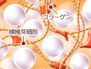 東京銀座のレティシアクリニック レディエッセ12